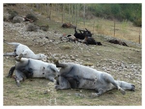 -- Horses and f shot dead by Iranian security forces in the Baneh border areas.
